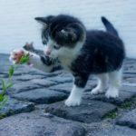 Viajar con mascotas informate aquí